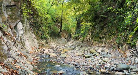 Горная река в лесу. Мамедово ущелье. Россия, Краснодарский край, поселок Лазаревское