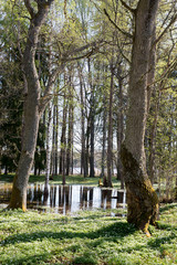 Fototapete - Spring landscape with flooded trees. Farnebofjarden national park in Sweden.