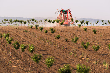 Fotomurales - Tractor spraying pesticides on cherry orchard