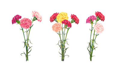 Set of three bouquets of colorful realistic Carnations isolated on white background. Vector illustration, EPS10 format.