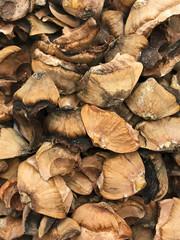 Husk from cedar cones