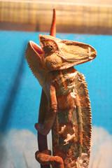 Chameleon. Wild nature. Lizard