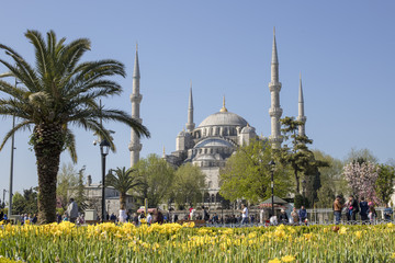 Sultanahmet (Blue) Mosque is an historical mosque in Istanbul.