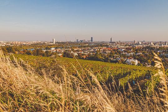 View over vineyard towards city of Vienna
