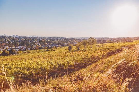 Golden hour over vineyard
