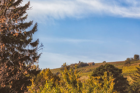 Autumnal low angle view of wine producing area near Vienna