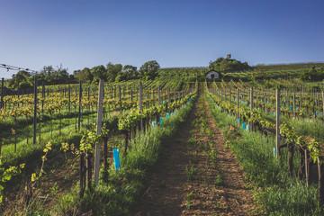 View over vineyards in Nussdorf