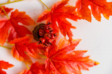 Hawthorn in vase and red maple leaves fall concept