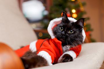 Photo of New Year's cat in Santa's costume