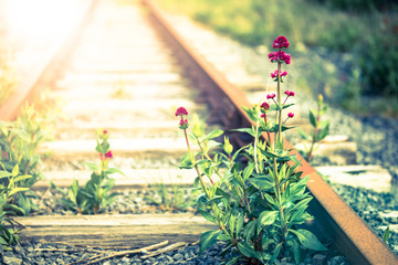 Wild Flowers blooming on overgrown and abandoned train tracks with lens flare effect background
