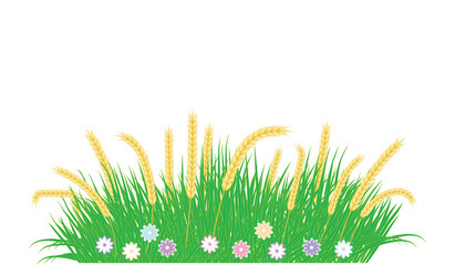 Grass green, full of flowers, ears of wheat - isolated on white background - art vector. Design Element