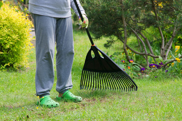 Garden cleaning. Raking dry grass in the garden.