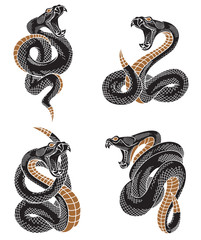 Viper snake set. Hand drawn illustrations in engraving ink technique isolated on withe background.