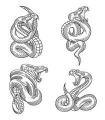 Viper snake set. Hand drawn illustrations in engraving technique isolated on withe background.