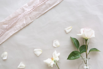Rose on a tender background