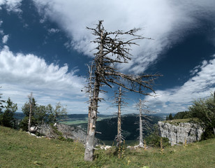 Dead trees on the Creux du Van, Neuchastel