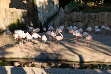 pink cranes near the river