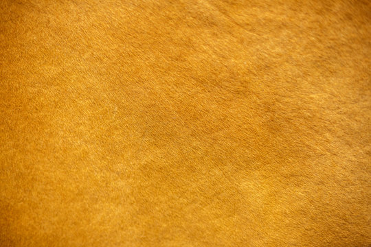 the texture of the pile cow fur