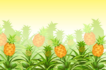 Plantation pineapple tree with fruits. Isolated vector illustration.