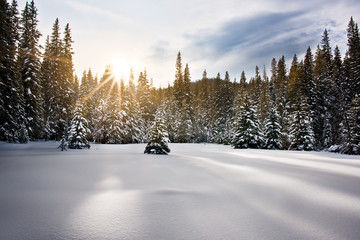 Sunset in a snow covered Meadows in a remote area in the Rocky Mountains, Colorado