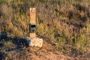 Camera trap in field for pictures of animals