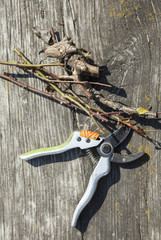 Pruning shears and cut branches