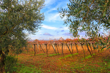 Italy, SE Italy, Region of Apulia, Province of Bari, Itria Valley,  Vineyards.