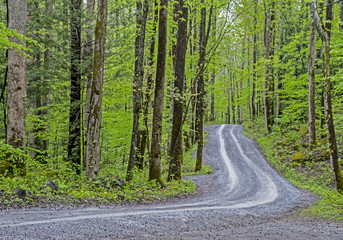 A small narrow road wings through a green forest in the Smoky Mountains.
