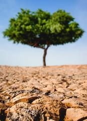 Cracked Dirt Tree