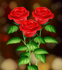 Beautiful Roses with Blur Background