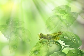 Glasshopper on Plant Leaf Green Background