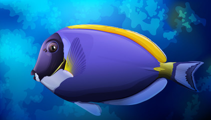 Blue Tang Fish in Ocean