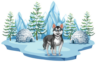 Siberian Husky Dog in Arctic
