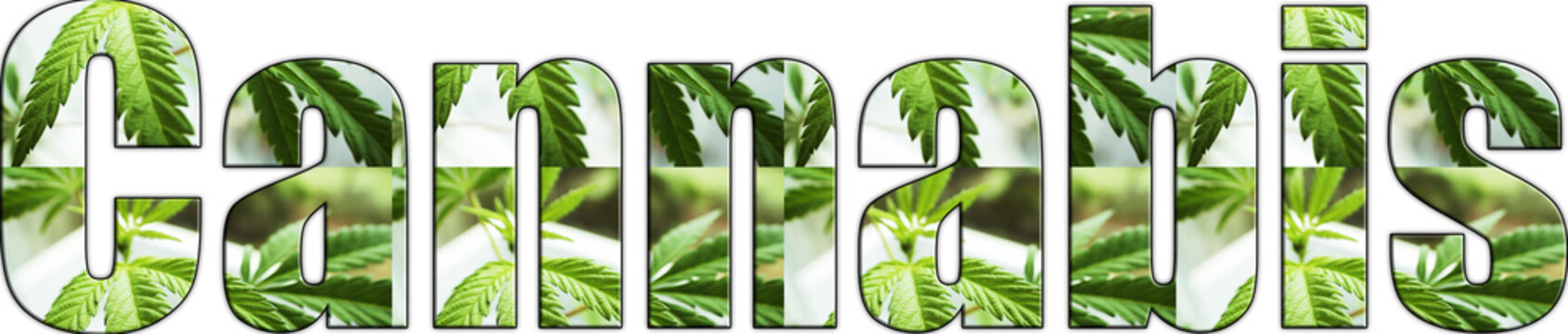 Cannabis Logo With Marijuana Leaves Inside Lettering With White Background