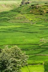 Rice paddies in Nepal