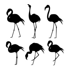 Flamingo Black Animal Bird Cartoon Character Vector Illustration