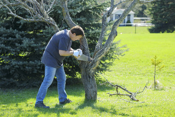 Man using saw for cutting a branch tree. Gardener working in the garden during springtime.