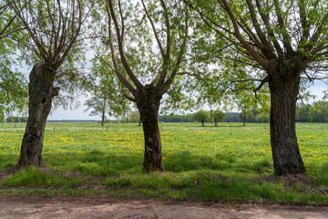 Zielone Podlasie
