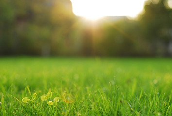 Fresh grass on a lawn in a park in bright sunlight.
