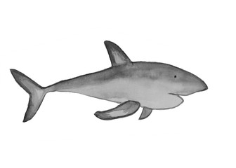 Watercolor Gray Shark fish illustration reef ocean fish on white background
