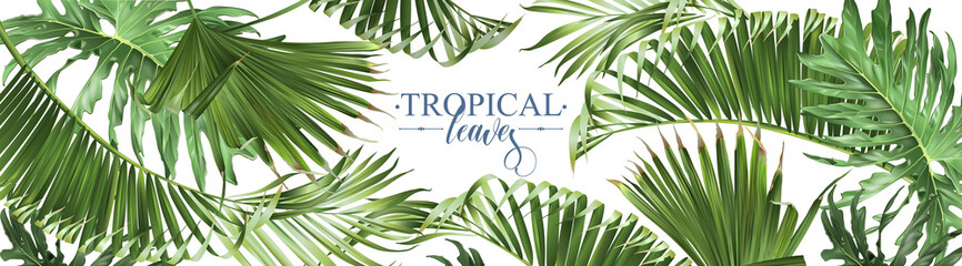 Tropical leaves web banner Wall mural
