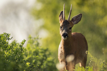 Portrait of a deer with a nice sunny atmophere