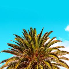 palm tropical vibes. Travel beach fashion content