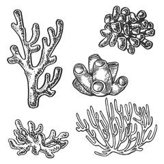 Coral sea plant engraving vector illustration