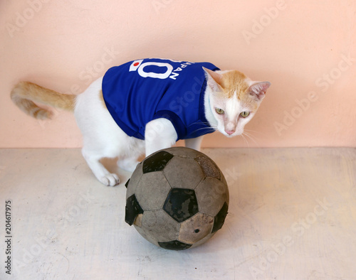 Cat wears blue shirt of Japan national football team with old soccer ball. 376098d7b