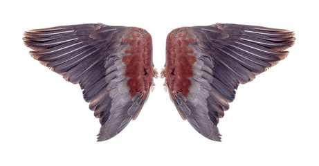Angel wings isolated on white background