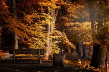 Eine Parkbank im herbstlichen Wald