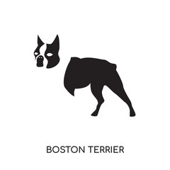 boston terrier logo isolated on white background , colorful vector icon, brand sign & symbol for your business