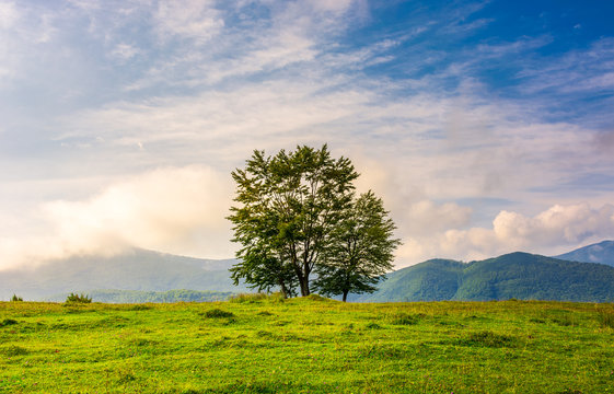 few trees on edge of a grassy hillside at sunrise with gorgeous sky. lovely autumnal scenery in mountains