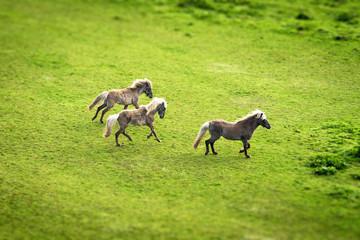 Three horses running on a green field